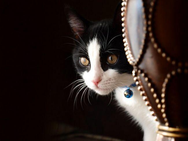 кошка просит кота