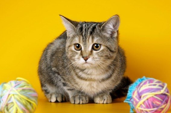 Что делать, если кот съел нитки