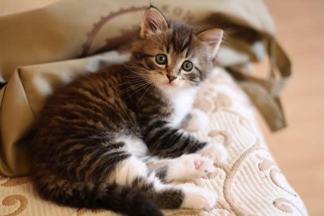 Что делать, если у котенка кал с кровью