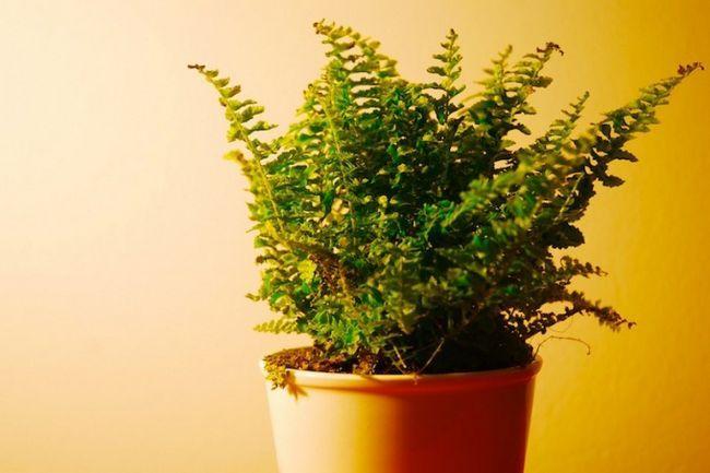 Для чего нужны комнатные растения