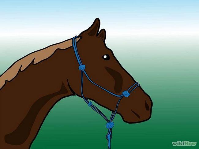 Как чистить лошадь