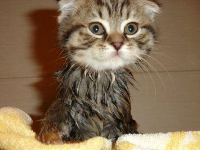 как мыть кота в тазике
