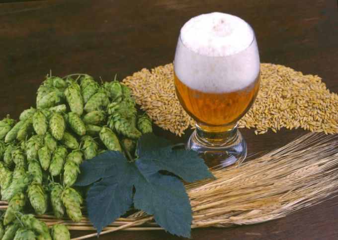 Как делают пиво