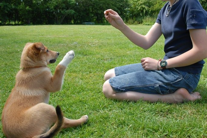 Как держать собаку
