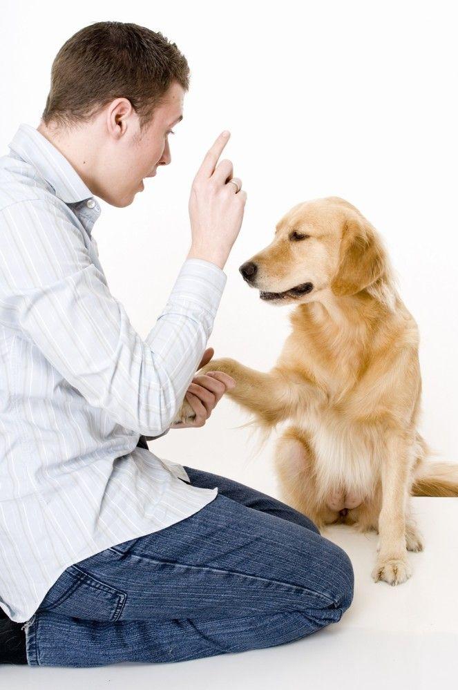 Как дрессировать собак