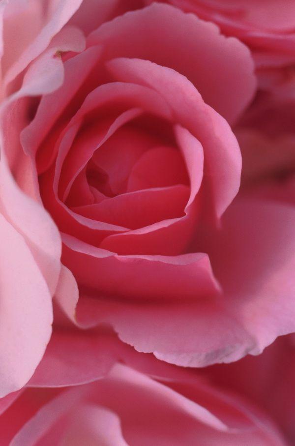 Представляйте обидчика в дымке розового цвета
