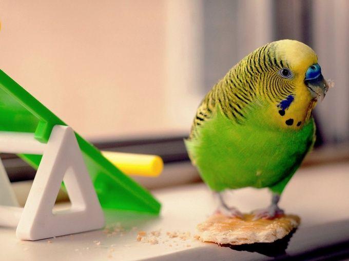 как кормить птиц