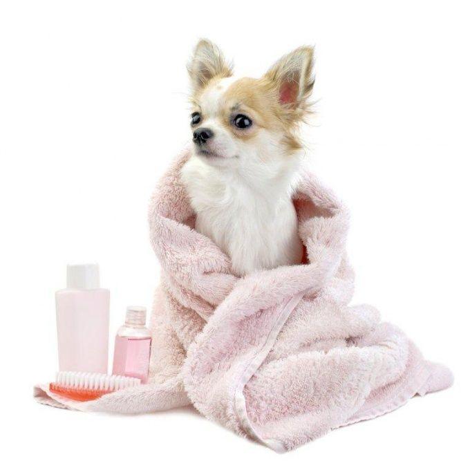 Как мыть собаку