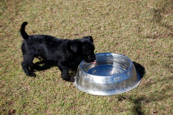 Как кормить щенка в возрасте от одного месяца
