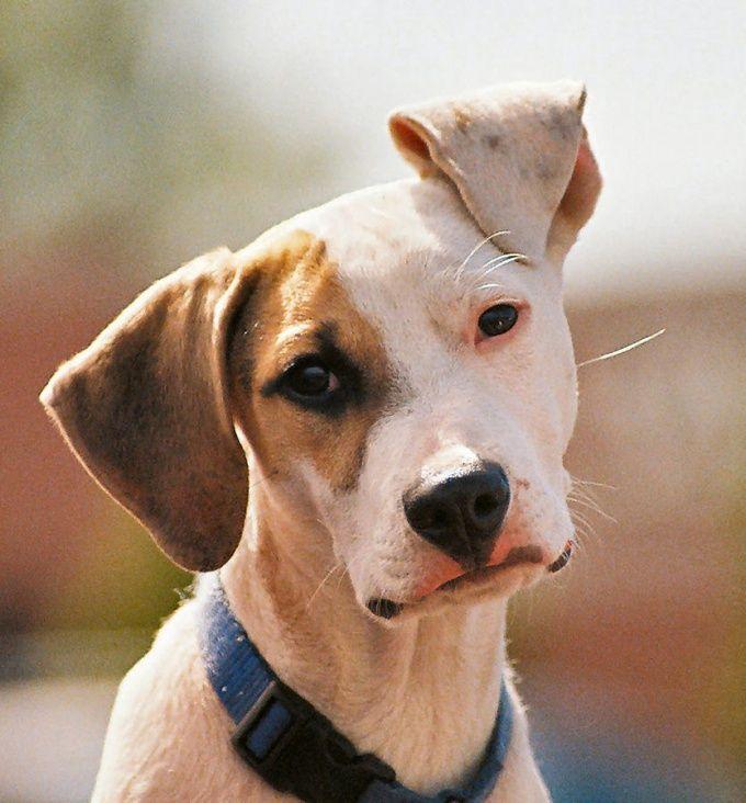 Как лечить глаза у собак