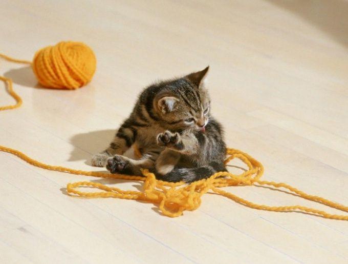 как промывать глаз котенку ромашкой