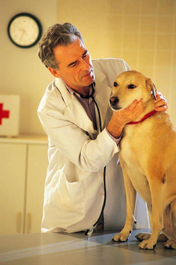 чем лечить суставы собаке