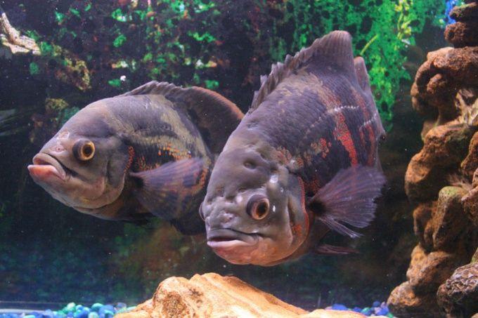 Как лечить рыб