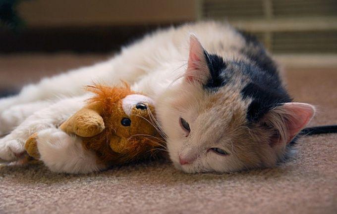 Как лечить у кошек насморк