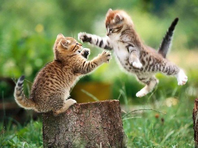 как вылечить насморк у котенка