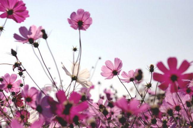 Как найти название цветка