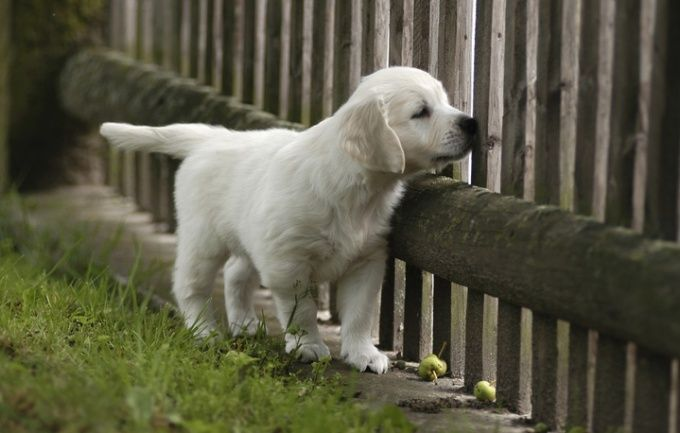 как найти пропавшую собаку