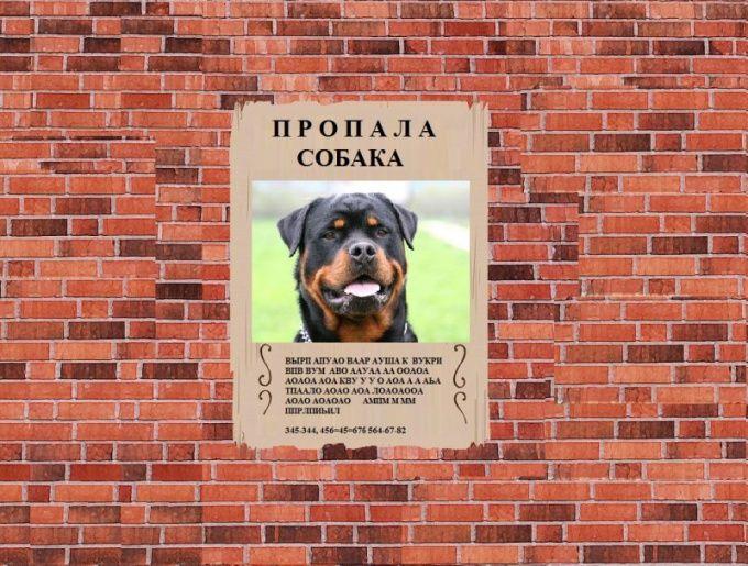 как найти сбежавшую собаку