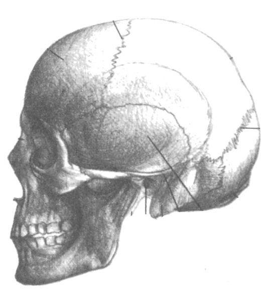 Как нарисовать череп