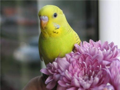 попугаи линяют