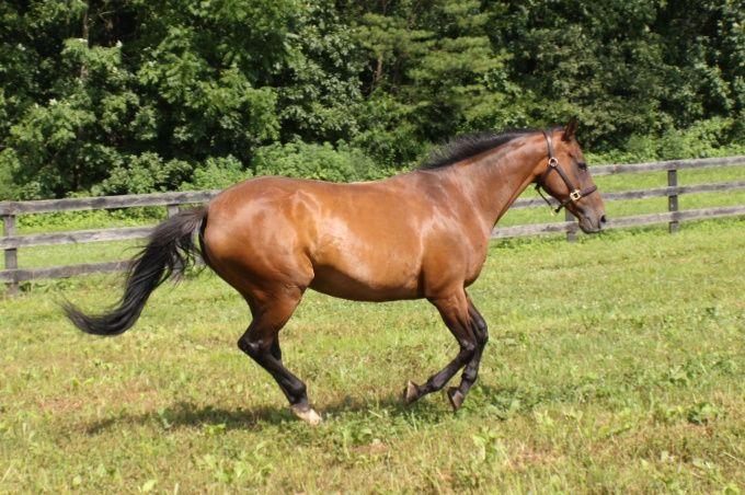 нахвать коня