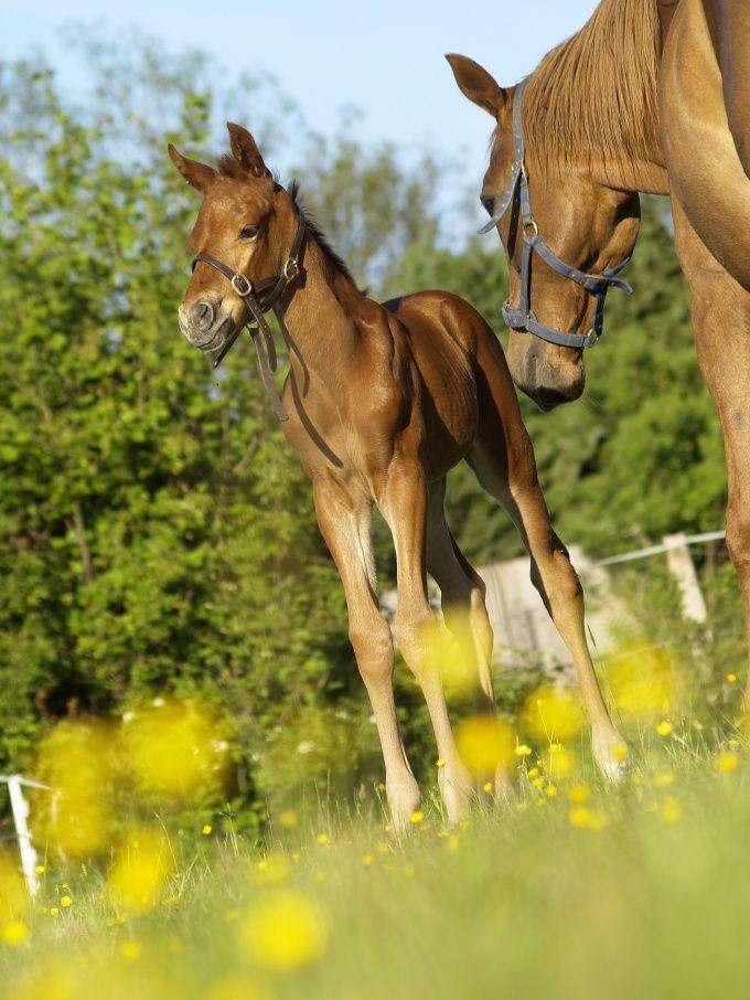 Как назвать лошадь