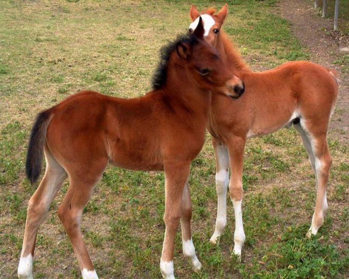 как назвать конный завод?