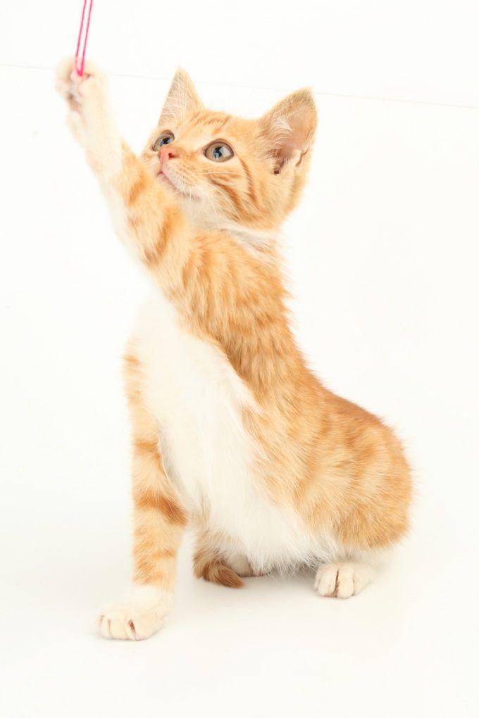 Как назвать котёнка-мальчика