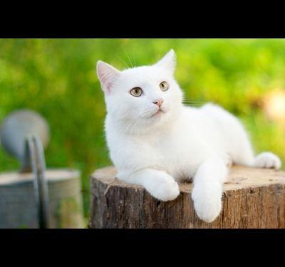 имя белому котенку