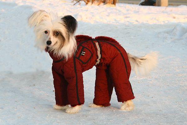 Как одеть собаку