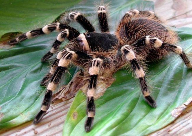 Как разводить пауков