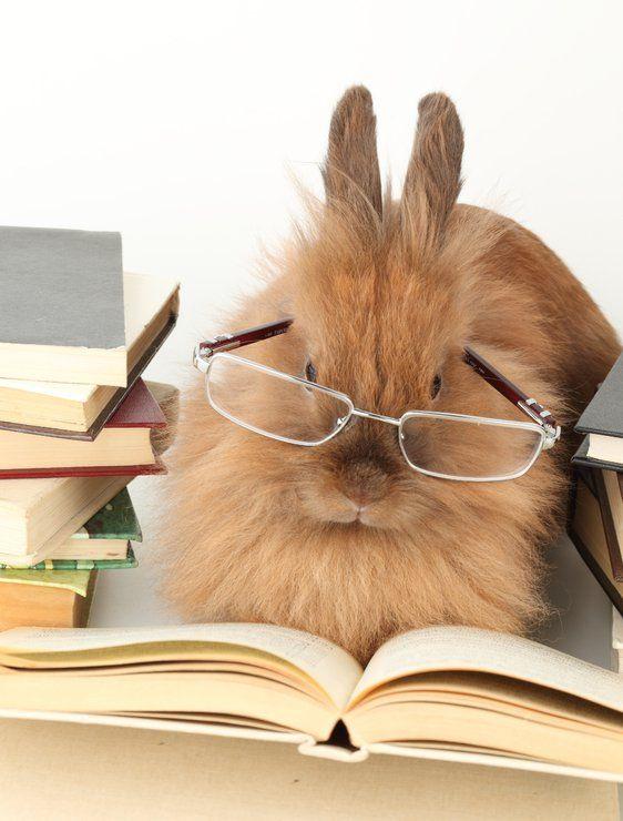 за сколько месяцев вырастает декоративный кролик