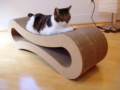 как отучить котенка царапать мебель?