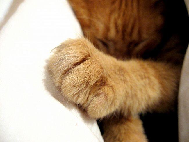 котенок дерет тюль что делать