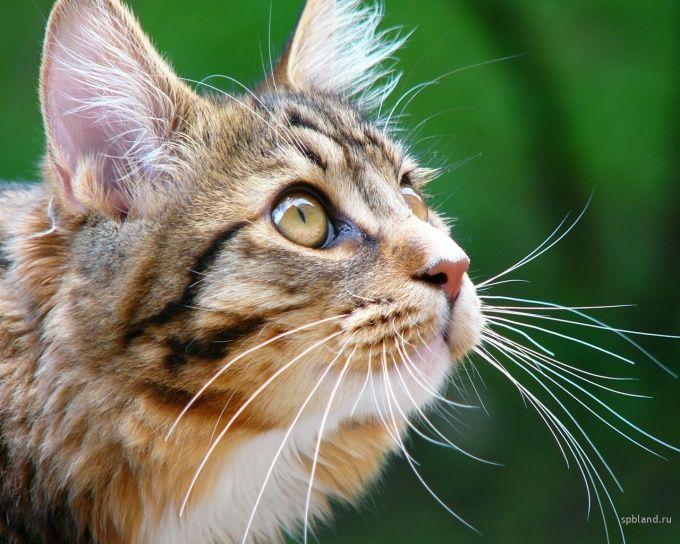 как отучить кота царапаться и кусаться