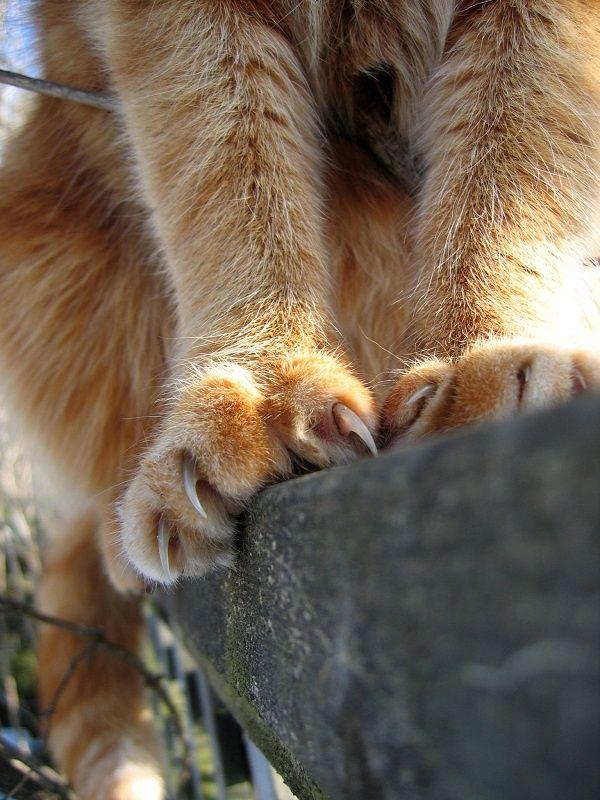 как отучить кота насиловать вещи