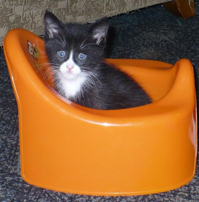 как отучить кота метить свою территорию