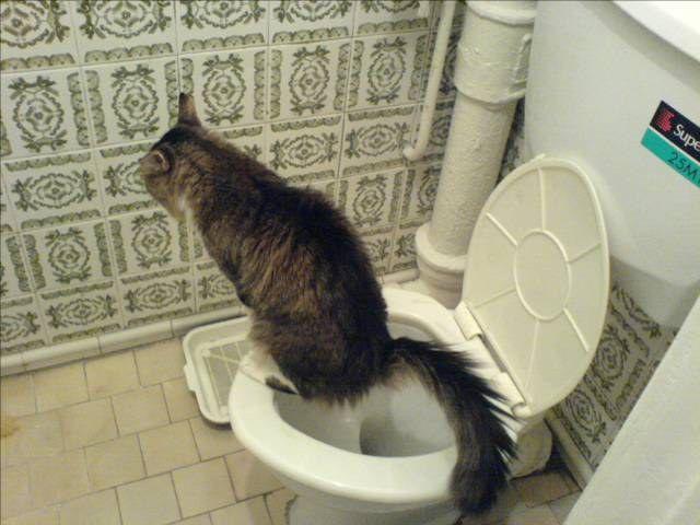 как отучить кота от меток