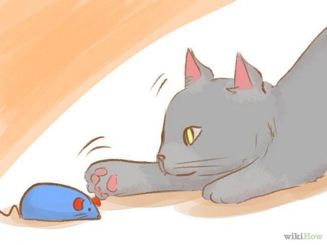 как отучить котенка кусать за ноги