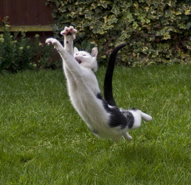 левомицетин на растения от кошек