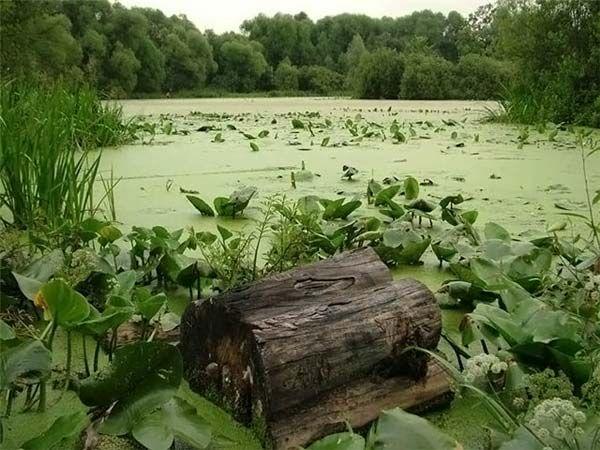 Как переходить болото