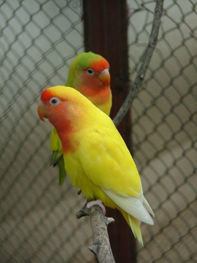 чем промыть клетку для попугаев