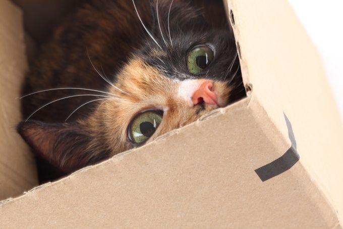 Как понять, что кошка рожает
