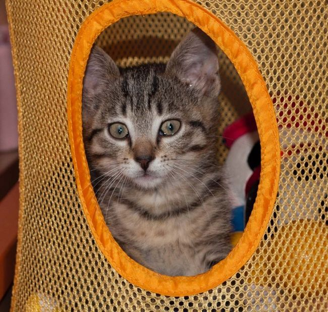 седативные препараты для стрижки кошек