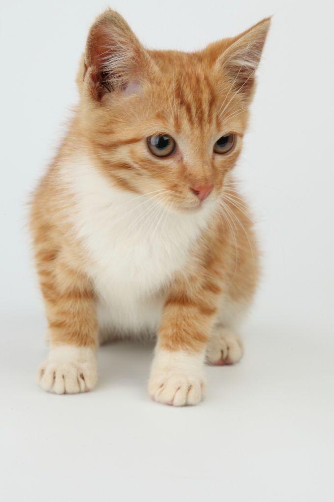 Как приручить котёнка к туалету