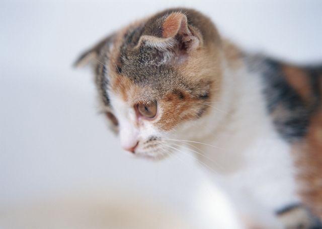 Как приучить котёнка есть корм