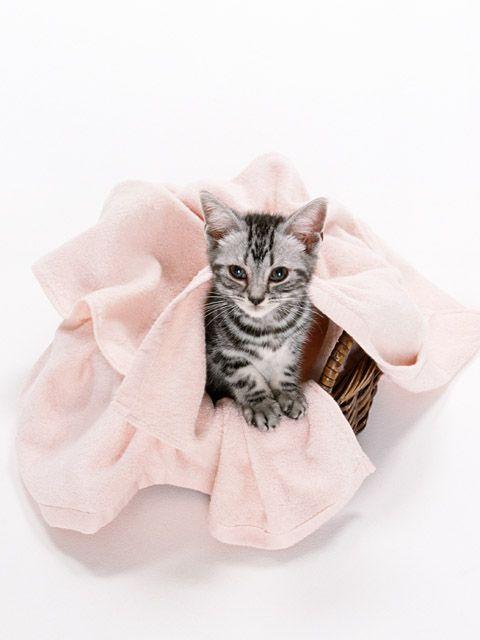 Как приучить кота ходить в лоток