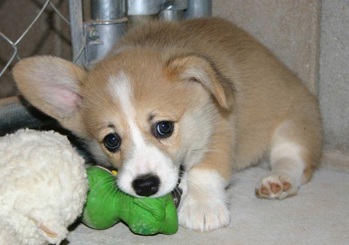 какую выбрать кличку для щенка