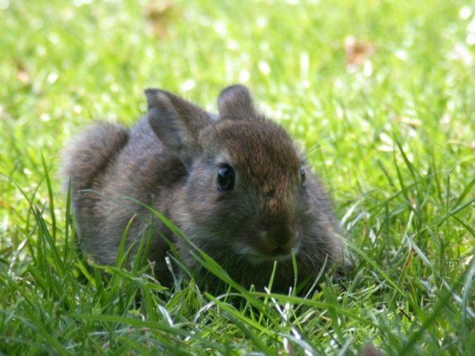 видио как отличить самца от самки кроликов