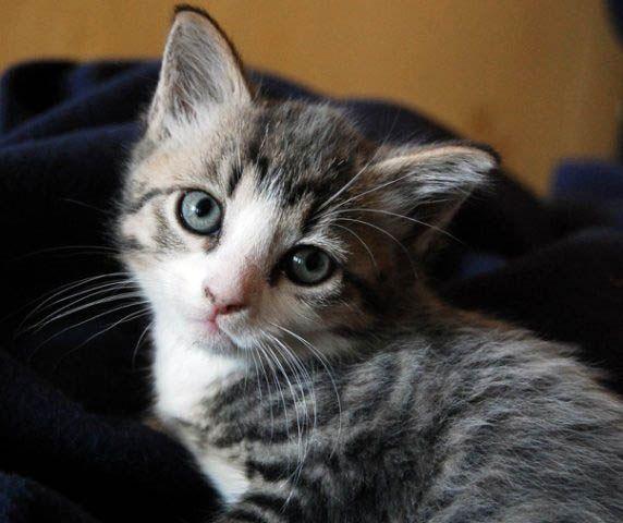 Как различить, кот или кошка